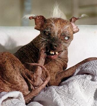 ugly-dog