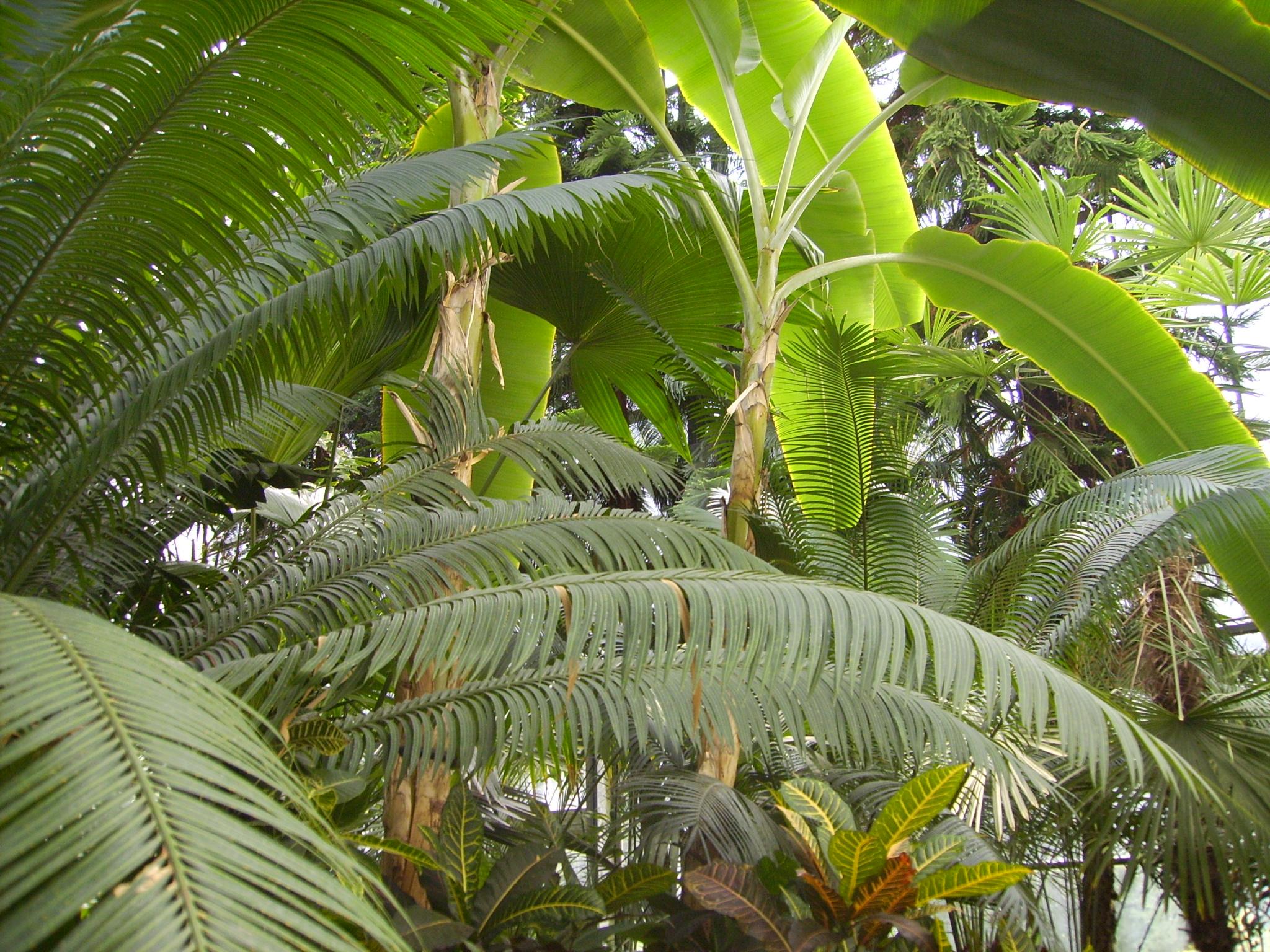 Poze Tanzania