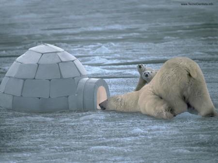 urs-polar-iglu-buzau