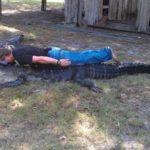 Planking pi crocodili