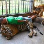 planking pi tigru